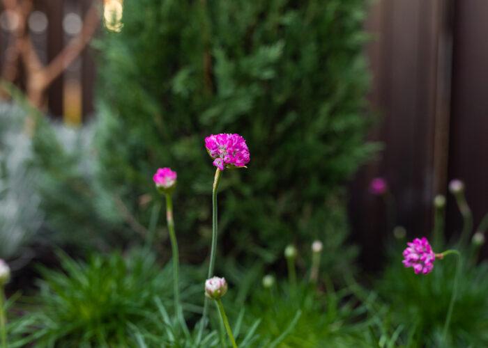 De Grote Tuinverbouwing - aflevering 15